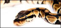 Spirit Of Python